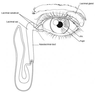 Eye and lacrimal duct.