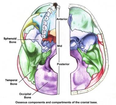 Osseous components and compartments of the cranial