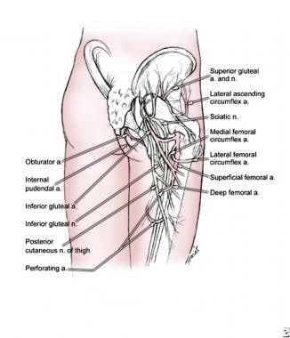 Superior and inferior gluteal arteries branch from