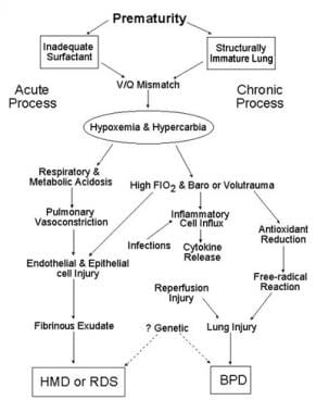 Schematic outlines the pathology of respiratory di