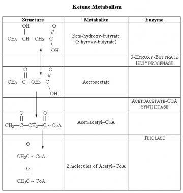 Ketone metabolism.