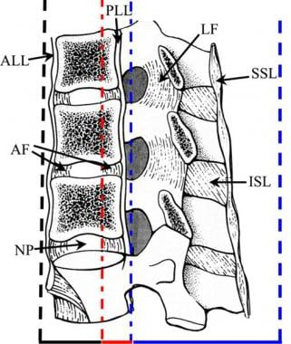 Lateral drawing of the 3 spinal columns of the tho