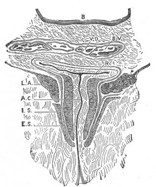 Coronal section through the anal canal.