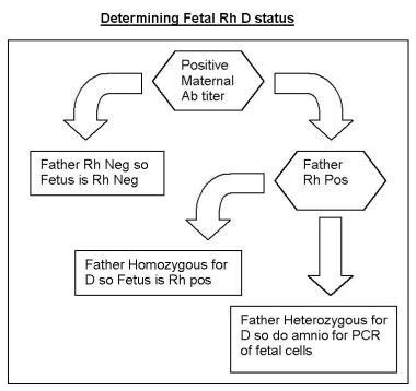 Determining fetal Rh D status.