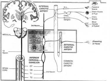 Cervical sympathetic pathway, including oculosympa