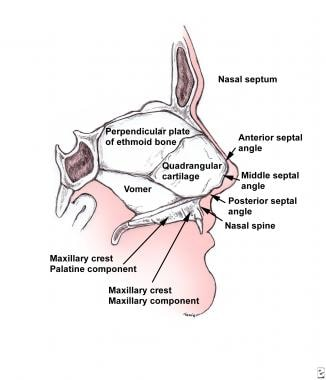 Nasal septum.