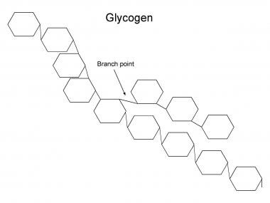 Structure of glycogen. The rings each indicate a g