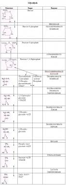 Glycolysis. The names of sugars are given with a ""