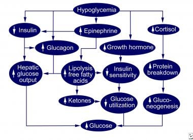 Normal hypoglycemic counterregulation.