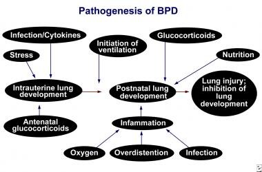 Bronchopulmonary dysplasia (BPD).