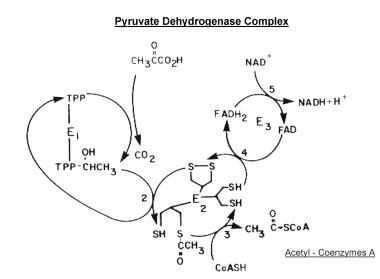 Scheme of the major reactions of the pyruvate dehy