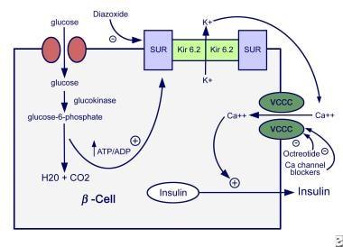 Mechanisms of insulin secretion.