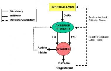 Hypothalamus, pituitary and ovaries form a functio