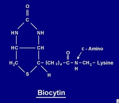 Biocytin is the product of the complete proteolysi