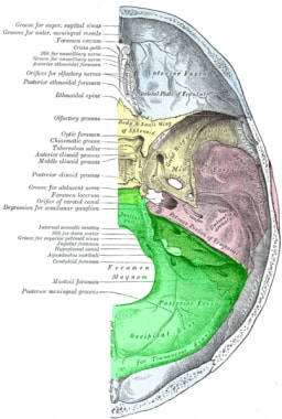 Posterior fossa anatomy.