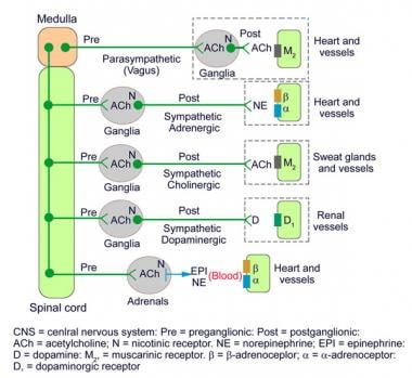 Sympathetic and parasympathetic neurotransmitters