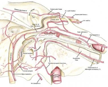 The transtemporal course of the facial nerve is sh