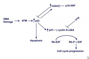 Tumor suppressor genes. DNA damage increases TP53