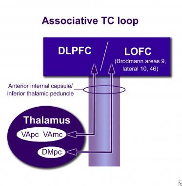 The limbic thalamocortical loop. MOFC = medial orb
