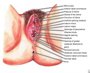Vagina Images - Photos - Pictures - CrystalGraphics