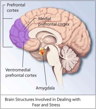 Brain structures involved in dealing with fear and