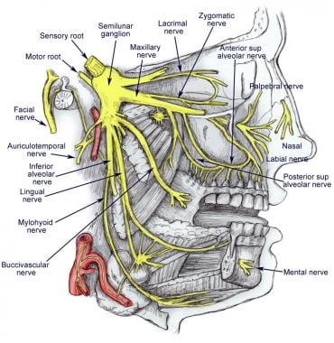 Diagram of trigeminal nerve with its 3 main divisi