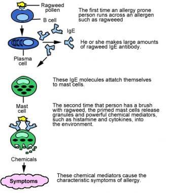 Serum tryptase.