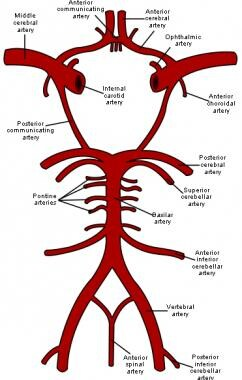 Schematic representation of the circle of Willis,
