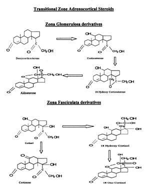 Transitional zone adrenocortical steroids.