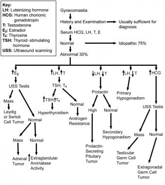Flow chart of the workup to determine the etiology