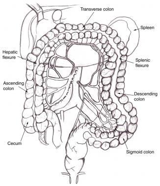 Superior mesenteric artery and inferior mesenteric