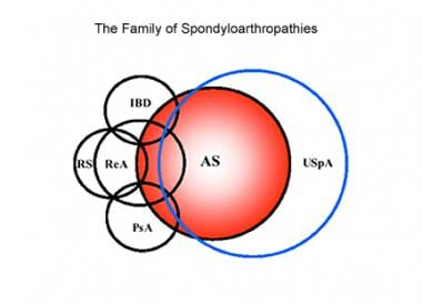 The family of spondyloarthropathies