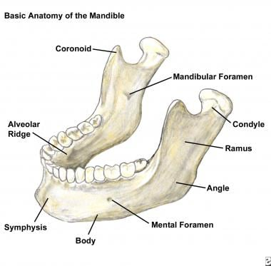 Basic anatomy of the mandible.