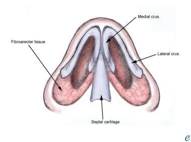 Normal nasal septum.