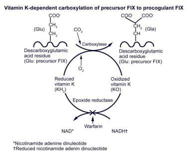 Vitamin K–dependent carboxylation of precursor fac