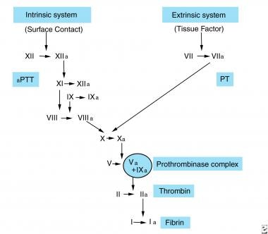 Intrinsic and extrinsic pathways of coagulation. F