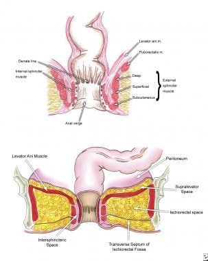 Anatomy of anal canal and perianal space.