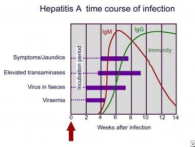 Hepatitis A. Time course of infection.