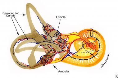 Anatomy of the semicircular canals.