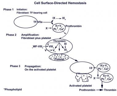 Cell surfaced-directed hemostasis. Initially, a sm