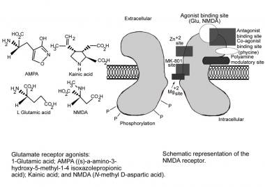 Schematic representation of N-methyl-D-aspartate (
