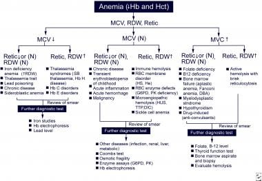 Algorithm for diagnostic approach and workup of an