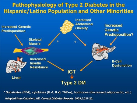 diabetes in the hispanic elderly population Among mexican-american adults age 20 and older, 334% of men and 307% of  women have cvd  in the total adult population, 382% have pre-diabetes.