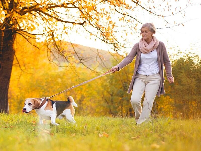 Brisk Walking Cuts HF Risk Regardless of Activity Level in Women's Health Study
