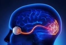 """The Mediterranean diet found to reduce """"older brain shrinkage"""""""