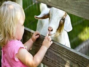 Children Raised on Farms Avert Allergies