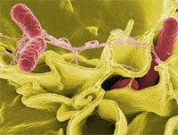 8 Cases of Food Poisoning: Find the Pathogen Responsible