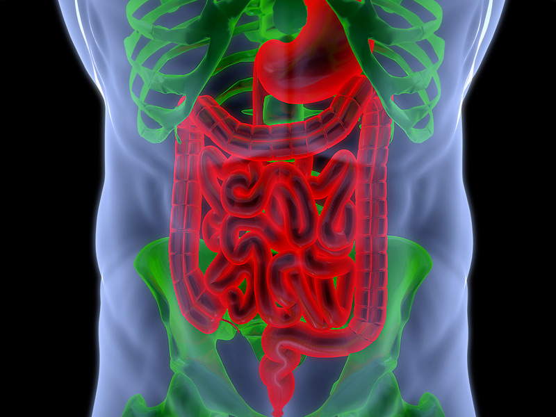 Bio-Artificial Intestine Offers New Hope for Serious Bowel Diseases