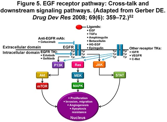 pathway crosstalk analysis of non small cell lung cancer These results contribute to a better understanding of the cross-talk between  in non–small cell lung cancer  for cancer research clinical cancer .