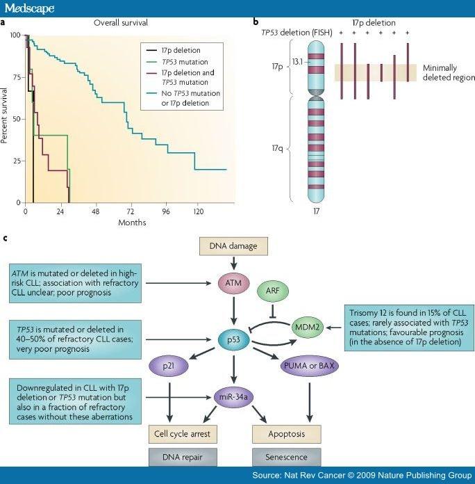 From Pathogenesis to Treatment of Chronic Lymphocytic Leukaemia